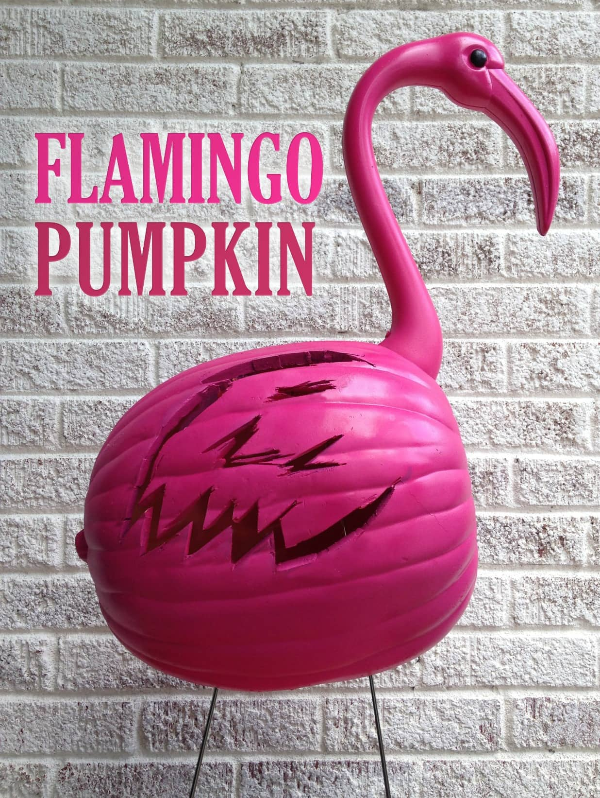 flamingo-pumpkin-types